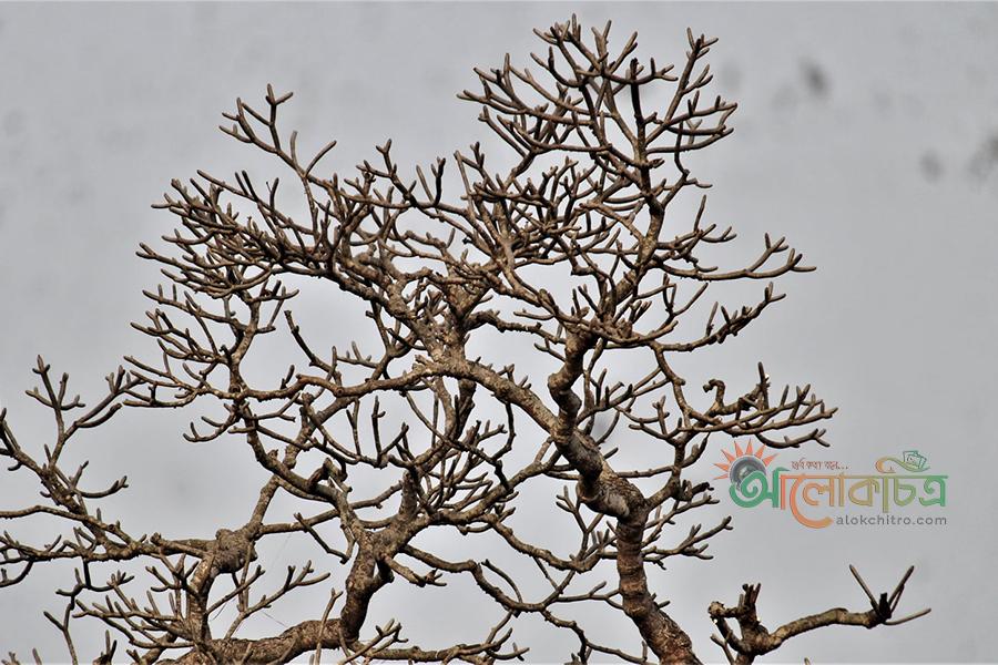 Poor tree